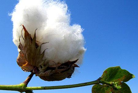 Amane Imabari Organic Cotton Towels